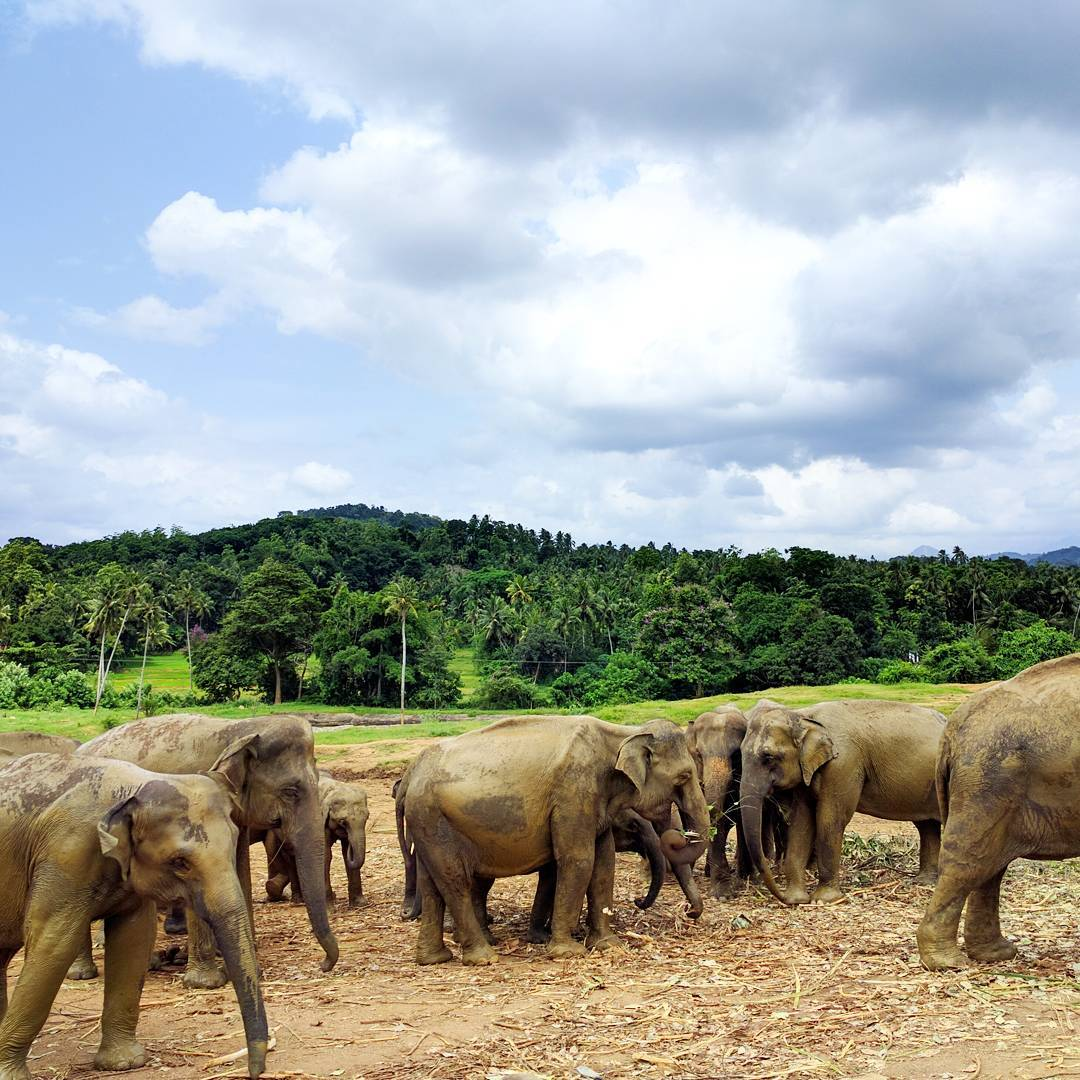 Life With Isabelle | Honeymoon in Sri Lanka: the wilderness is calling...