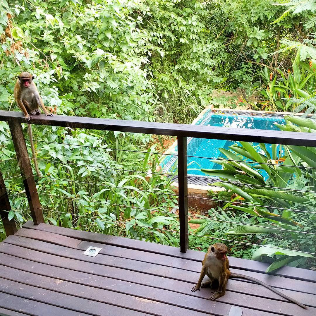 Life With Isabelle | Honeymoon in Sri Lanka: visitors on the deck