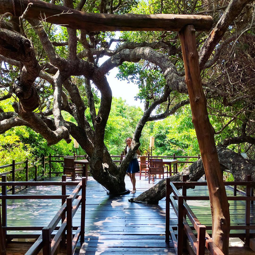 Life With Isabelle | Honeymoon in Sri Lanka: up among the trees